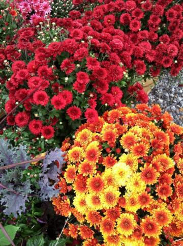flowers for landscaping and garden center